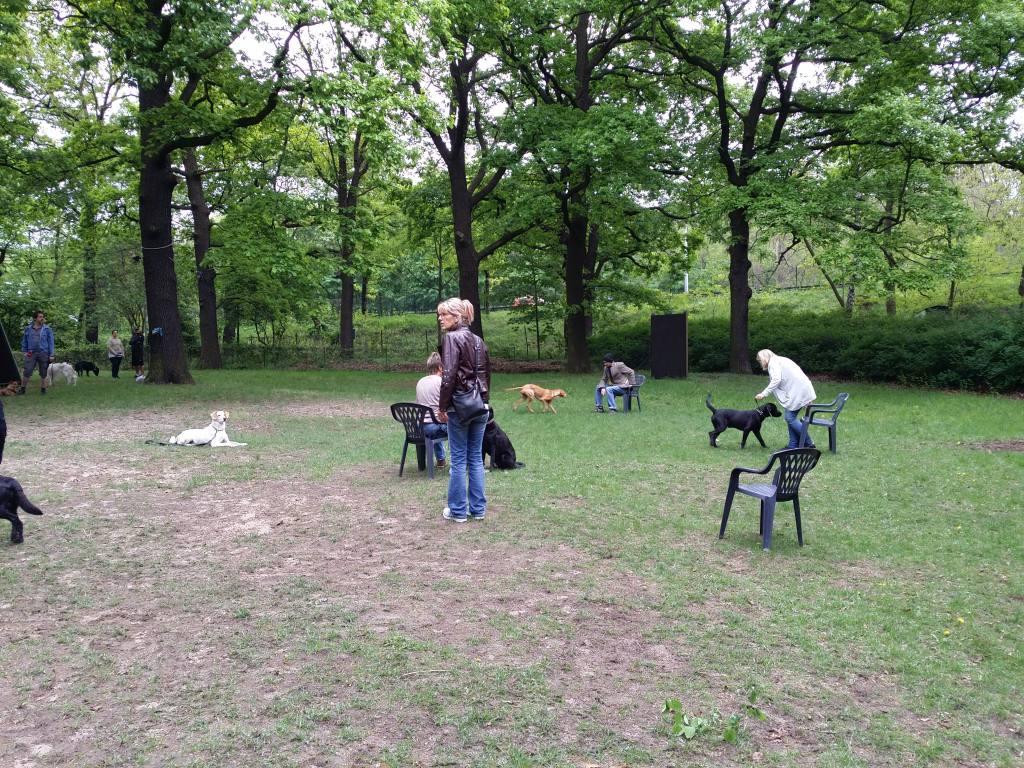 2015.05.10_hundetraining_02.jpg