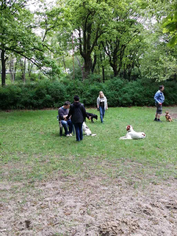 2015.05.10_hundetraining_14.jpg
