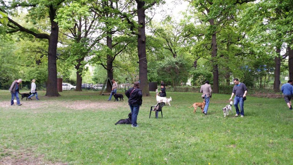 2015.05.10_hundetraining_19.jpg
