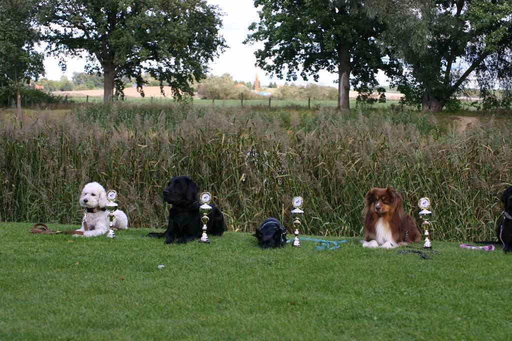 2012-09-22_hunderennen_mahlow_293