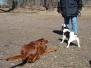 07.04.2013 Hundetraining