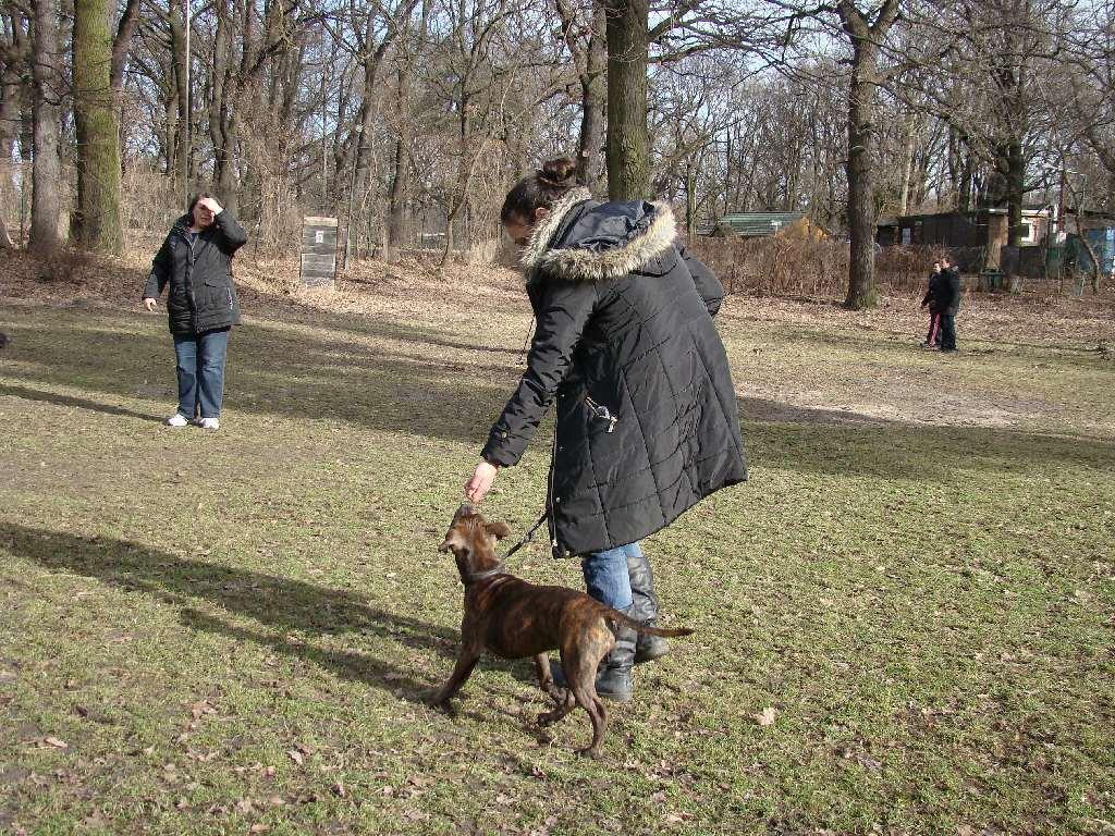 2014-02-09_hundetraining_038