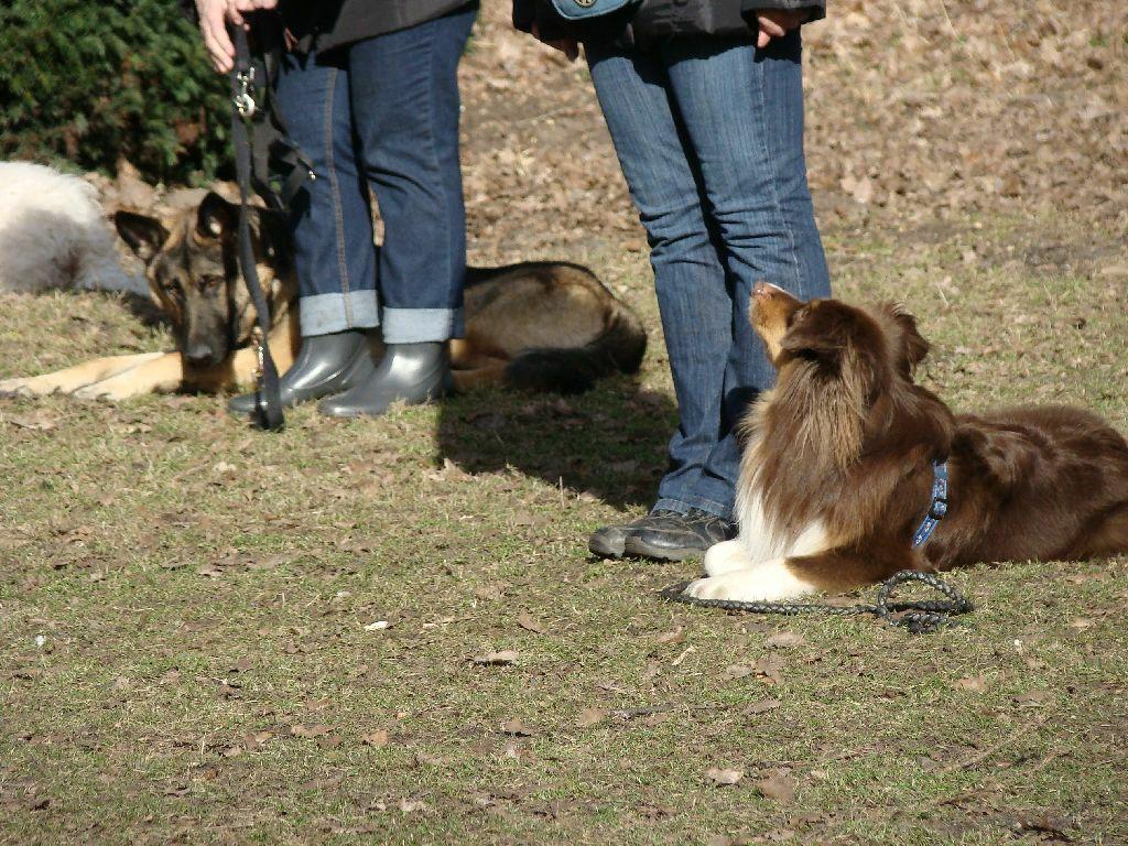 2014-02-09_hundetraining_167