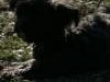 2014-02-09_hundetraining_189