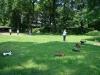 2013-06-09_hundetraining_014