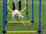 13.04.2014 Hundetraining