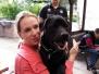 15.06.2014 Hundetraining