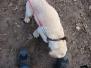 16.02.2014 Hundetraining
