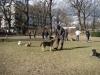 2014-02-16_hundetraining_147