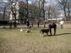 2014-02-16_hundetraining_149