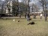 2014-02-16_hundetraining_151