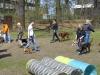 2013-04-21_hundetraining_52