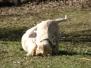 23.02.2014 Hundetraining