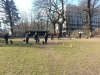2014-02-23_hundetraining_193