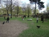 2013-04-28_hundetraining_02