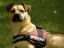 28.04.2013 Hundetraining