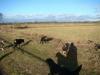 2012-12-30_hundetraining_004
