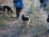 2012-12-30_hundetraining_058