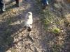 2012-12-30_hundetraining_062