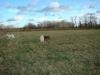 2012-12-30_hundetraining_088