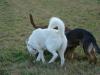2012-12-30_hundetraining_093