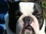 01.04.2012 Hundetraining