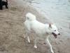 2012-07-01_hundetraining_20