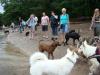 2012-07-01_hundetraining_27