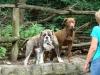 2012-07-01_hundetraining_39