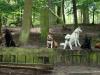 2012-07-01_hundetraining_49a