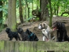 2012-07-01_hundetraining_51