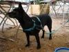 2012-07-01_hundetraining_87