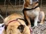 01.07.2012 Hundetraining