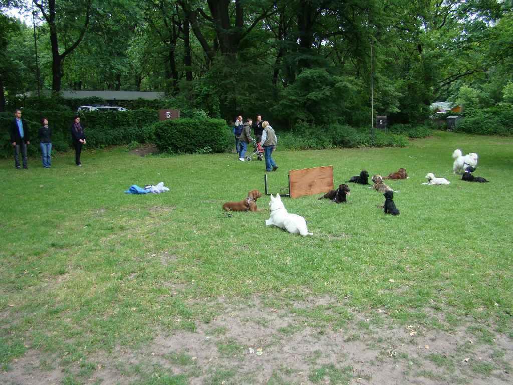 2012-06-03_hundetraining_112