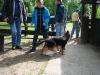 2012-06-03_hundetraining_002