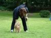 2012-06-03_hundetraining_019