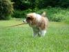 2012-06-03_hundetraining_028