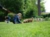 2012-06-03_hundetraining_029