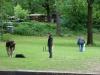 2012-06-03_hundetraining_041