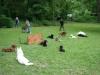 2012-06-03_hundetraining_111
