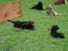 2012-06-03_hundetraining_118