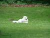 2012-06-03_hundetraining_137