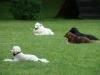 2012-06-03_hundetraining_141