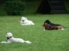 2012-06-03_hundetraining_142