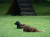 2012-06-03_hundetraining_163