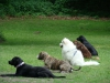 2012-06-03_hundetraining_165