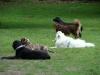 2012-06-03_hundetraining_172