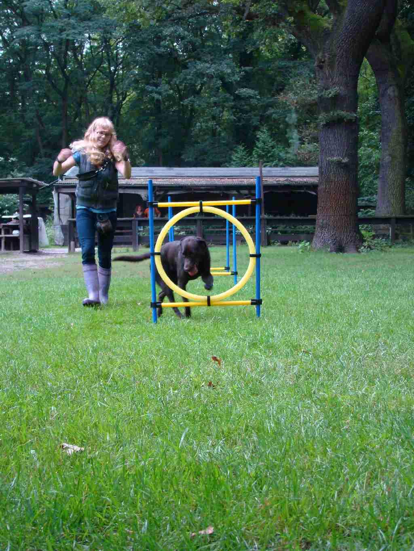 2012-08-05_hundetraining_073