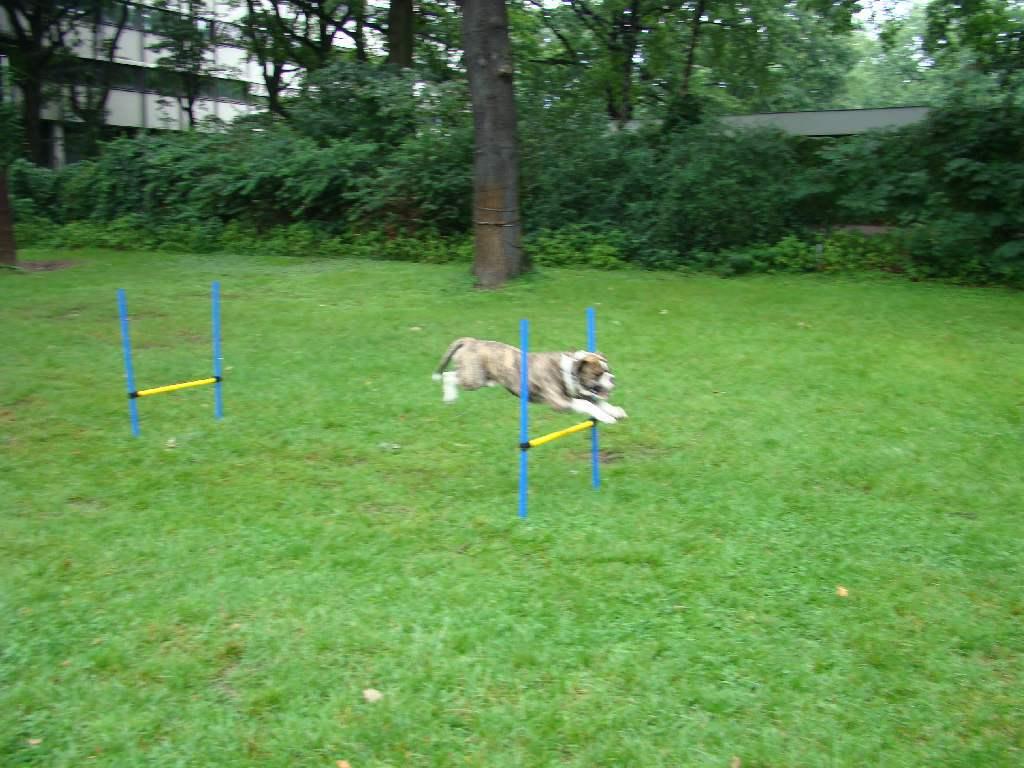 2012-08-05_hundetraining_156