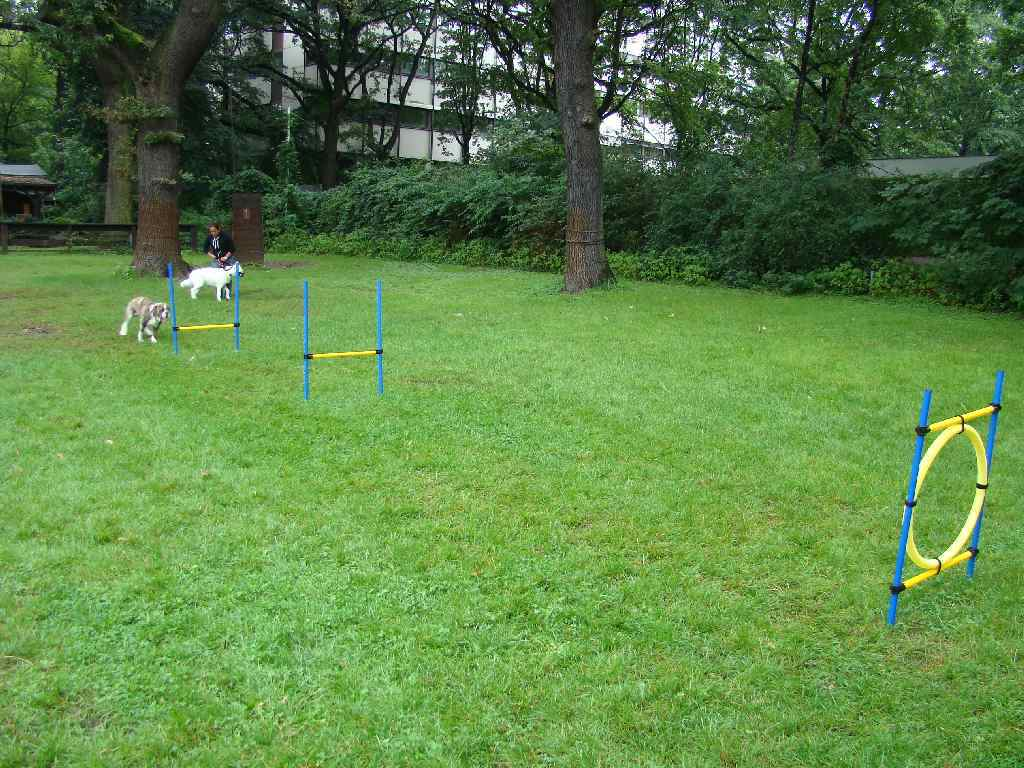 2012-08-05_hundetraining_158